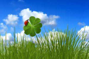 coccinelle rouge sur trèfle à quatre feuilles vert sur ciel bleu